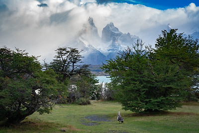 Torres del Paine NP, Chile