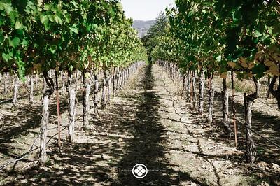 Vineyard Hallway