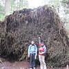 Un «petit» arbre déraciné.