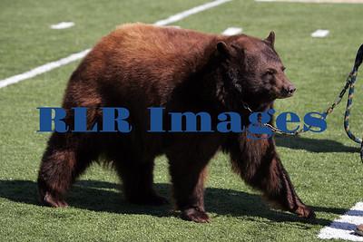 Baylor Bears vs Univ Texas Nov 6 2005 (8)