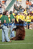 Baylor Bears vs Univ Texas Nov 6 2005 (6)