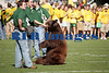 Baylor Bears vs Univ Texas Nov 6 2005 (3)