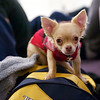 2012 NESCAC Championships: Chihuahua fan of Trinity College