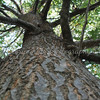 A Tree Climbing Ant's View<br /> <br /> [Project 2 - The Outdoors From Different Views]