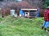 Relocated chicken coop