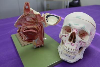 Dental hygiene Models