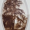 Tree (07618)