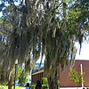 """July 2015<br /> <br /> """"TREES WITH SPANISH MOSS"""" (and two Upward Bound Students)<br /> <br /> """"Tougaloo College is a private, co-educational, historically black, liberal arts institution of higher education founded in 1869, in Madison County, north of Jackson, Mississippi, USA. Originally established by New York–based Christian missionaries for the education of freed slaves and their offspring, from 1871 until 1892 the college served as a teachers' training school funded by the state of Mississippi. In 1998 the buildings of the old campus were added to the National Register of Historic Places."""" <br /> <br /> Additionally, """"Tougaloo College is ranked as one of the Best in the Southeast by Princeton Review (2007 and 2008 edition) and one of the top 20 liberal arts institutions in the nation by The Washington Monthly (2007 edition). It is also included in the U.S. News and World Report's list of best colleges (2007 edition) and is ranked in the top 20 of the Best Black Colleges by U.S. News and World Report (2008 edition).""""<br /> <br /> Furthermore, """"According to the National Science Foundation, Tougaloo College ranks among the top 50 U.S. institutions whose graduates earn PhDs in science and engineering disciplines and among the top 15 historically black colleges and universities in the graduation of minority males and females with undergraduate degrees in the physical sciences. The College has produced more graduates who have completed their PhD degrees through the UNCF-Mellon Doctoral Fellowship Program than any other institution in the nation.""""<br /> <br /> ~ Reprinted text from Wikipedia here:<br /> <br /> <a href=""""https://en.wikipedia.org/wiki/Tougaloo_College"""">https://en.wikipedia.org/wiki/Tougaloo_College</a><br /> <br /> Also, Beverly Wade Hogan, a graduate of Tougaloo College, has served as President since May 2002. She is the first woman and the 13th president to lead this historic institution. Her photo is here:<br /> <br /> <a href=""""https://www.tougaloo.ed"""