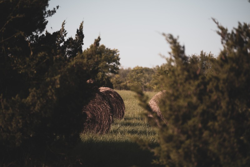 Hay bales  on the J.K. Gold Classic course in Augusta, KS. (Alex Todd | Collegian Media Group)