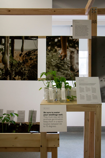 """Willard Hall presented """"Cultivate — An Investigation of Narrative's Roll in Design,"""" by Master of Fine Arts candidate Taylor Klover this week. Squirt bottles were placed for visitors to water their new seedlings. (Andrew Kemp   Collegian Media Group)"""
