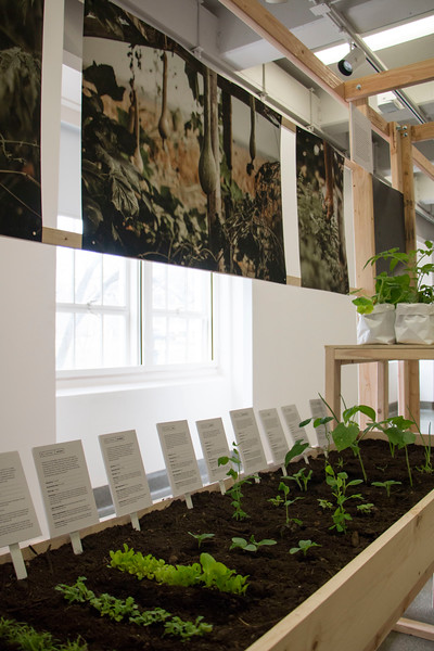 """Willard Hall presented """"Cultivate — An Investigation of Narrative's Roll in Design,"""" by Master of Fine Arts candidate Taylor Klover this week. Early stages of the plants were planted for visitors to see. (Andrew Kemp   Collegian Media Group)"""