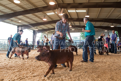 Pigs parade around the arena floor at the Riley County Fairgrounds on July 9, 2016 during the Dr. Bob Hines Swine Classic. The show featured a variety of events over two days where 4-H, FAA and other kids partake to show off their swine projects. (Evert Nelson | The Collegian)