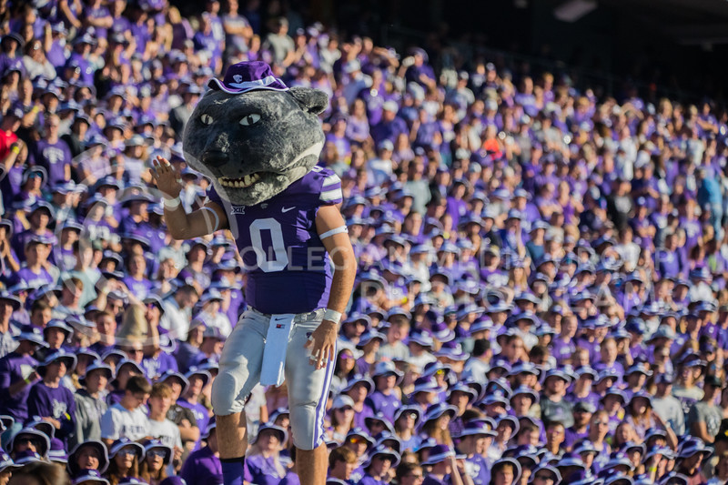 Willie The Wildcat pumps up crowd after touchdown at game against the TCU Horned Frogs. The Wildcats beat TCU 24-17. ( Dalton Wainscott I Collegian Media Group )