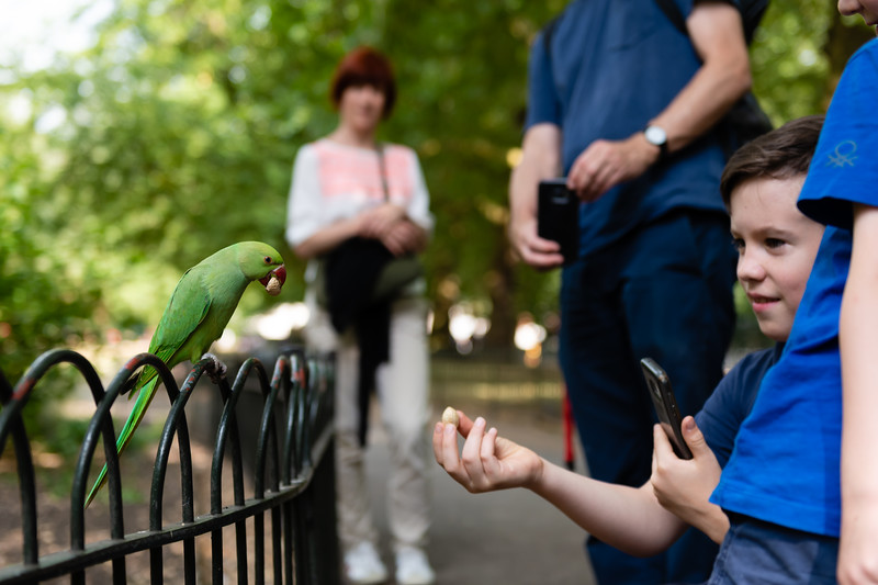A young boy reaches out to feed a ringneck parakeet located in Green Park, one of the Royal Gardens near Buckingham Palace. Ringneck parakeets populate South Eastern UK in large flocks. Their natural range is tropical, but suriving the colder winters of the UK seemingly is no problem due to the abundant supply of food. (Olivia Bergmeier | Collegian Media Group)