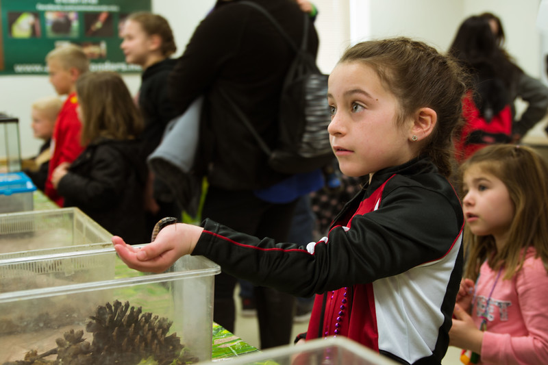 Questioning whether she made the right decision, this young girl looks towards the insect master to make sure her new friend will not crawl any farther. During K-State's Open House the education department filled Bluemont with fun activities in the science room, the animal room, the living wax museum, and other fun filled rooms. (Hannah Greer | Collegian Media)