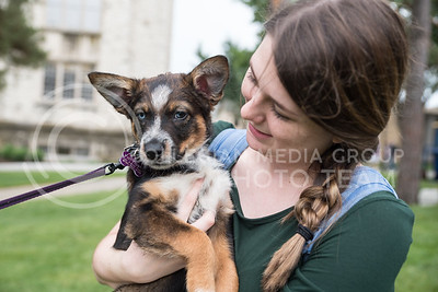 April Berry, freshman in statistics, holds Lucas on Wednesday, Aug. 24, 2016, in the Quad on K-State's campus. Pet Away Stress is sponsored by K-State Counseling Services. (Austin Fuller   The Collegian)