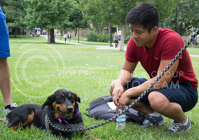 Jon Chen, freshman in business, attempts to get the attention of a dog during the Pet Away Stress event hosted by Counseling Services and Purple Power Animal Welfare Society in the Quad on Aug. 24, 2016. (Miranda Snyder   The Collegian)