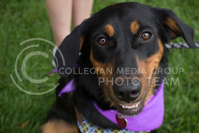 Several dogs were brought to the Quad for the Pet Away Stress event hosted by Counseling Services and Purple Power Animal Welfare Society on Aug. 24, 2016. (Miranda Snyder | The Collegian)