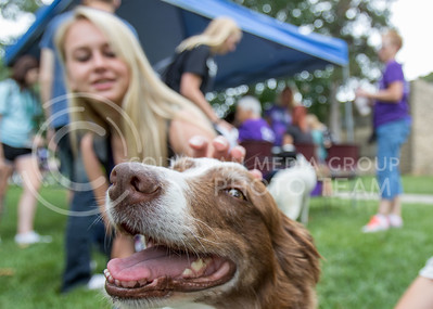 Australian Shepard, Trixie, enjoys being petted by a Kansas State Student during the Pet Away Stress event on Aug. 24, 2016 in the Quad. The event was sponsered by Counselling Services. (Mason Swenson | The Collegian