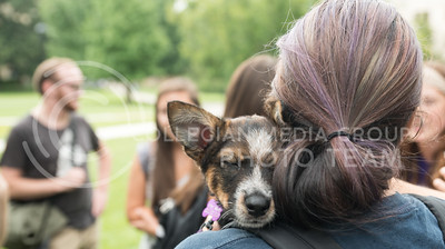 Athlene Keppen, senior in criminology and pre-law, holds Lucas on Wednesday, Aug. 24, 2016, in the Quad on K-State's campus. Pet Away Stress is sponsored by K-State Counseling Services. (Austin Fuller   The Collegian)