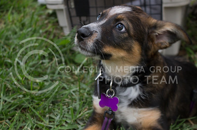 Lucas, a 10-week-old puppy, relaxes in the grass during the Pet Away Stress event hosted by Counseling Services and Purple Power Animal Welfare Society in the Quad on Aug. 24, 2016. (Miranda Snyder   The Collegian)