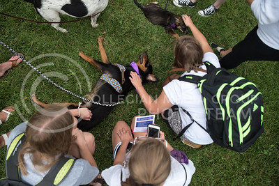 K-State students surround dogs, from puppies to seniors, to pet away the stress of the new semester on Aug. 24, 2016, in the Quad on K-State's campus. Pet Away Stress is sponsored by K-State Counseling Services. (Austin Fuller | The Collegian)