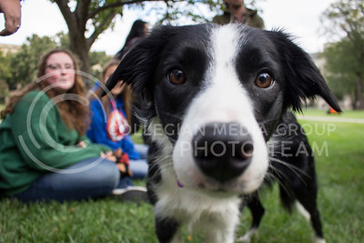 "A dog named Cy looks on at the ""Pet Away Stress"" event in the Quad on Oct. 12, 2016. (Miranda Snyder 