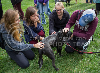 "From left: Lauren Broce, freshman in public relations, Emily Miner, graduate student in English, Bonnie Beere, freshman in open option, and Taryn Huckabay, senior in biology play with Mack, a dog up for adoption, at the ""Pet Away Stress"" event in the Quad on Oct. 12, 2016. (Miranda Snyder 