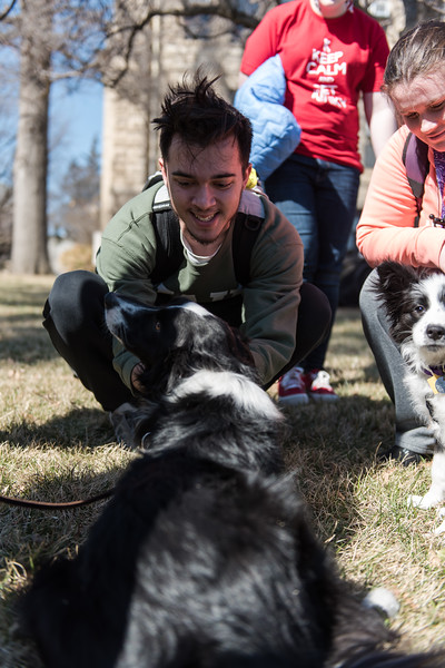 "Students gathered on K-State's campus on Wednesday to ""pet-away"" their stress with the help of Purple Paws and K-State's Counseling Services. (Olivia Bergmeier 