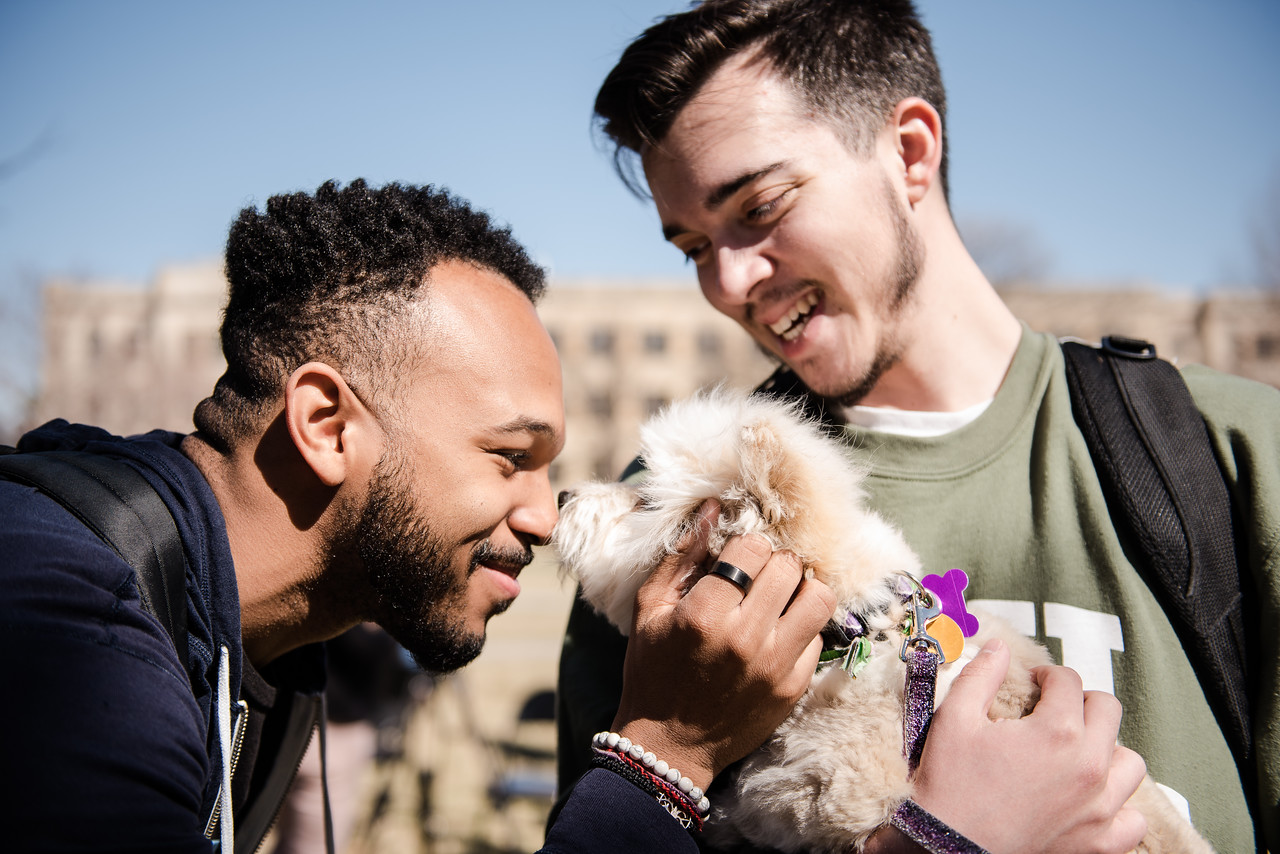 "Gerry Bolden, senior in secondary education, says hello to Oliver, one of the foster dogs helping at Pet-Away Stress while Greg Woods, sophomore in journalism holds him. Students gathered on K-State's campus on Wednesday to ""pet-away"" their stress with the help of Purple Paws and K-State's Counseling Services. (Olivia Bergmeier 