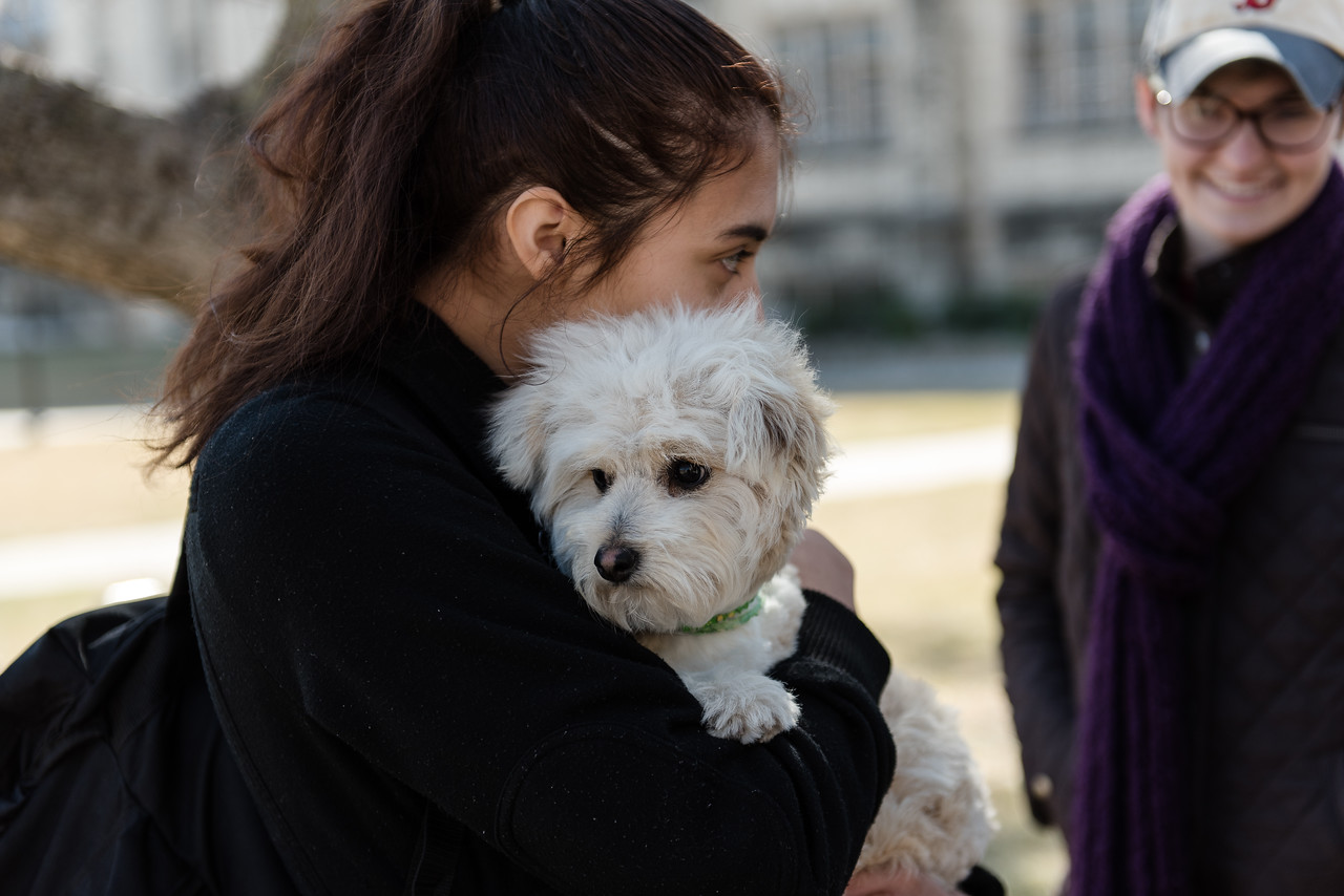 "Oliver, a Maltese puppy volunteer, receives a hug from a K-State student at Pet-Away Stress. Students gathered on K-State's campus on Wednesday to ""pet-away"" their stress with the help of Purple Paws and K-State's Counseling Services. (Olivia Bergmeier 