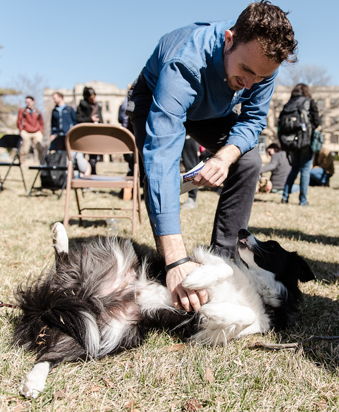 "Rupert, a Collie volunteer, enjoys a belly-rub from David Williams, a grad student in mathmatics, at Pet-Away Stress. Students gathered on K-State's campus on Wednesday to ""pet-away"" their stress with the help of Purple Paws and K-State's Counceling Services. (Olivia Bergmeier 