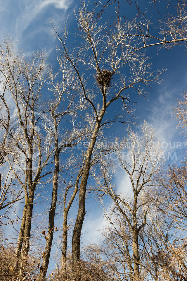 An eagle's nest sits in a tree at Tuttle Creek State Park on Feb 18, 2017. (John Benfer | The Collegian)