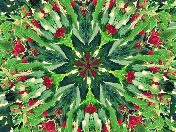 HOLLY BURST<br /> Greens and Reds bring holiday cheer in this Collide-a-Scope!