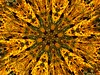 MAGICAL JOURNEY<br /> These golden Black Eyed Susans seems to draw us closer, as we seem to step deeper and deeper into new dimensions!