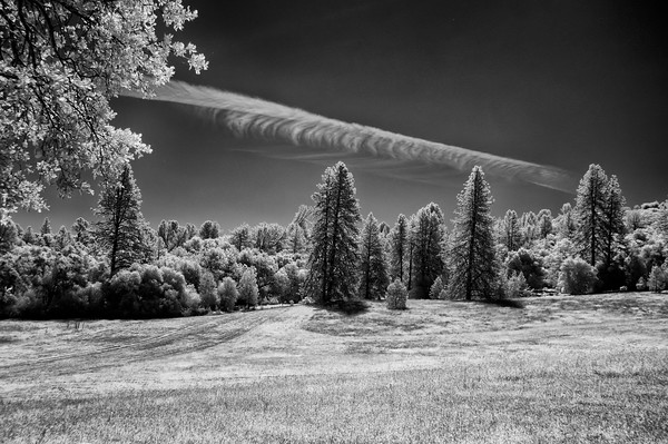 Infrared View of Mountain Meadow near Coloma