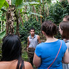 Tour of the Finca Las Brisas Don Elías coffee farm, near Salento, Colombia