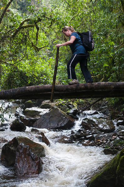 Challenging river crossing in the cloud forest of Valle de Cocora, Colombia