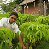 PADF Columbia May 2006: Project in Ure, beneficiaries growing rubber plants.Here 5 families work on 4 hectacres of land, using saplings grown in the biofabrica. Here Jose Miguel Mendez who is 16 years old learns how to transplant and care for rubber plants
