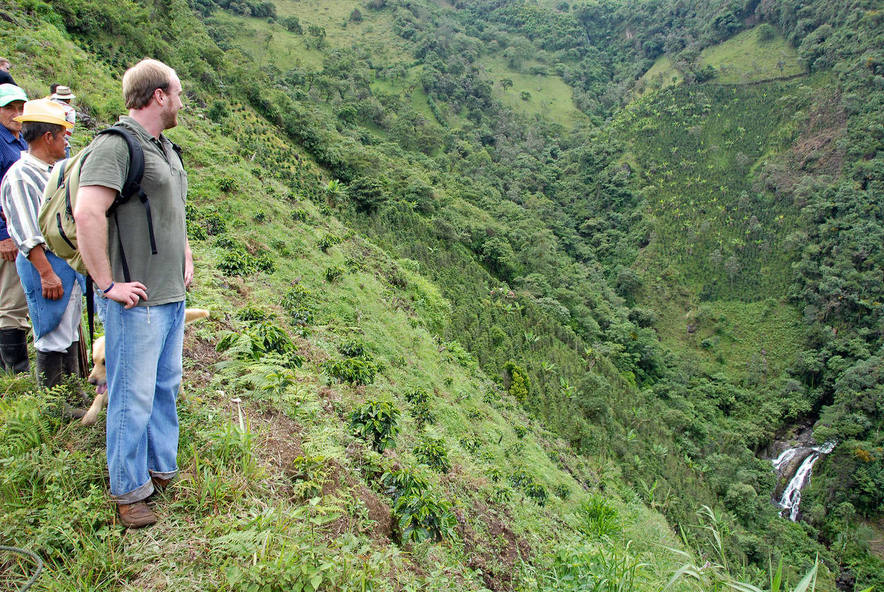 Aleco Chigounis, coffee importer, looking down the steep slopes.....