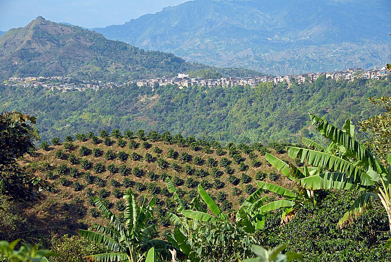 With La Union ever further in the distance - we passed young coffee trees below us.