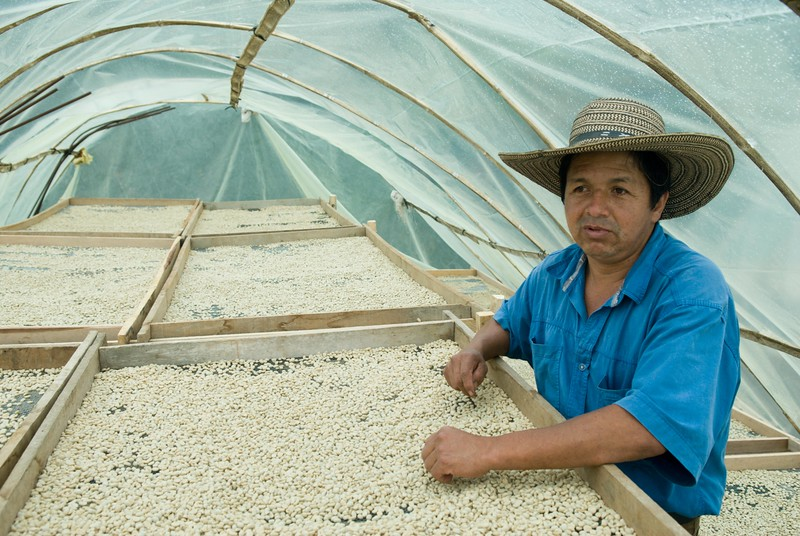 "Marco Aurelio with his beans drying inside his ""parabola.""  Outside it is raining.  He keeps the ends slightly open to keep ventilation going, crucial to keep the drying process on track.  Parabolas are fairly recent and have made a huge contribution towards Colombian coffee quality. The beans are on raised racks. It rains a lot during the harvest in Colombia and without this ventilated protection drying the coffee consistently in a timely manner would almost always be impossible."