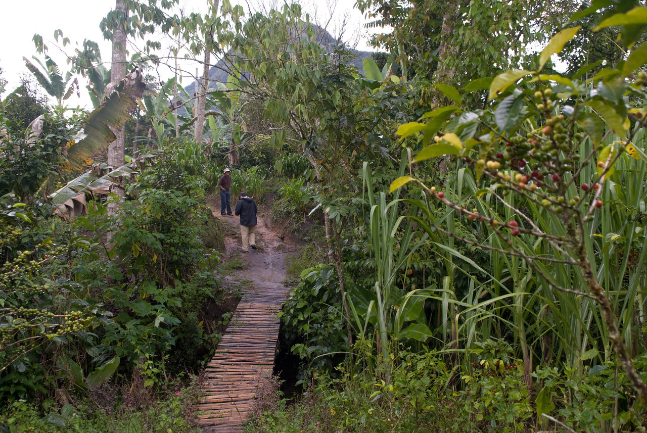 We enter the lush Finca Faldas del Cerro, meaning the lower slopes, or folds, of the the hill.