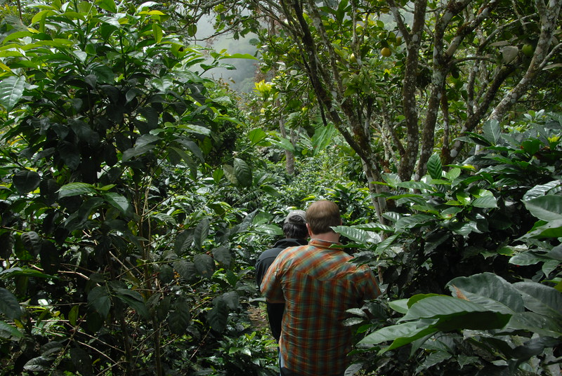 Aleco leads the way through the organic certified Finca Oasis.