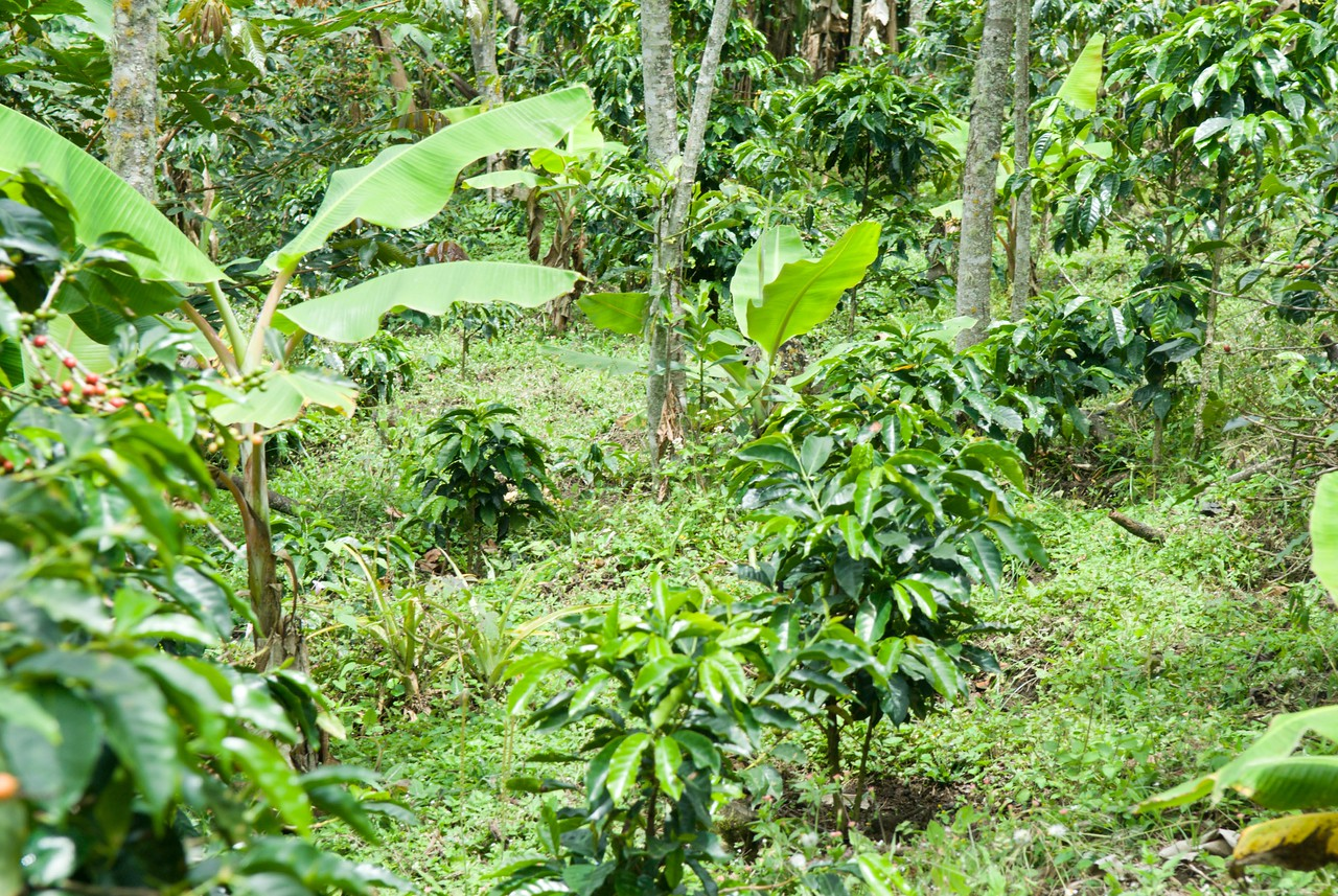 Marco Aurelio has always farmed organically but only obtained certification recently.  He grows a great diversity of plants, many herbal both for pleasure and healing.  This was taken during the rainy season.
