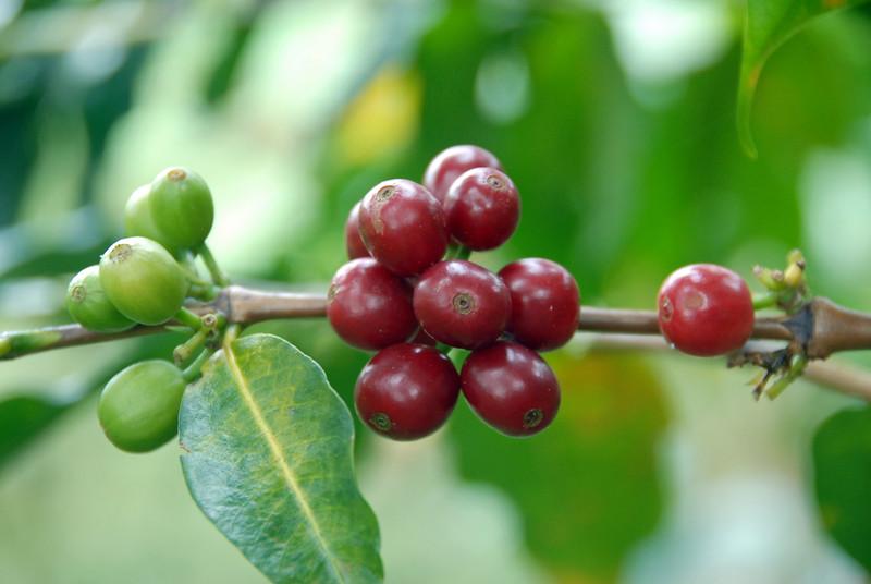 Healthy fruit.