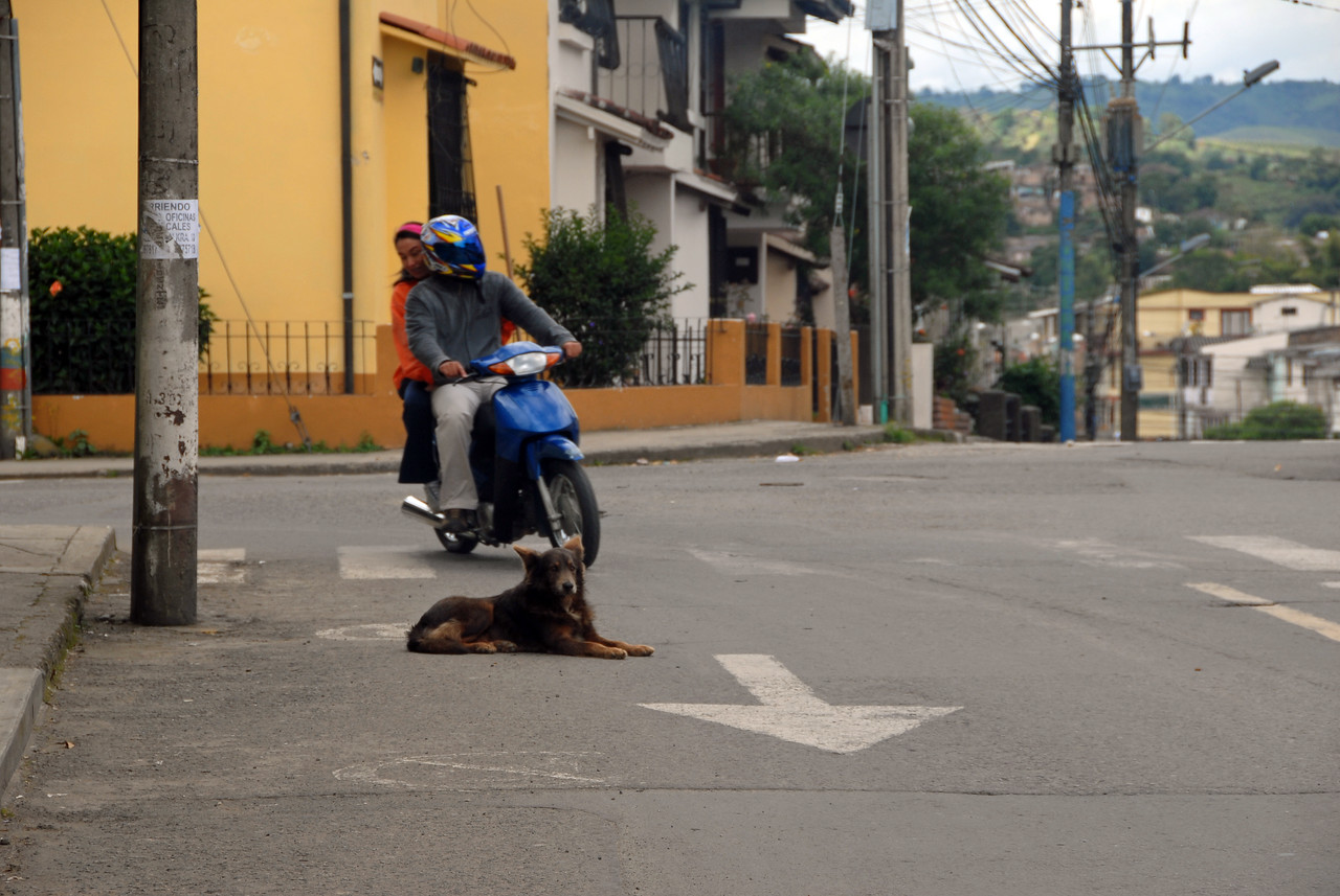 On the outskirts of Popayan white gives way to some other colors.  A dog takes it easy while all sorts of vehicles pass within inches.  I missed photographing the huge bus which had just passed by.....