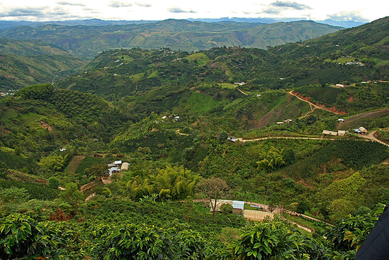 Small coffee farms in south Huila.