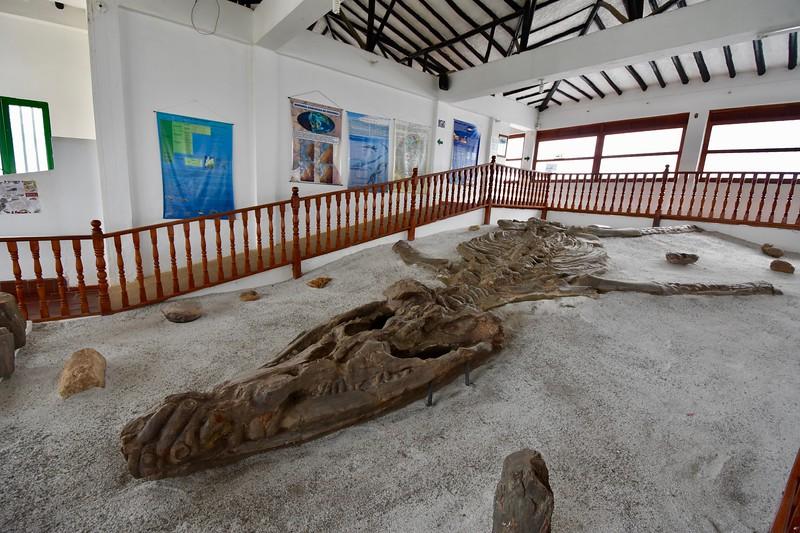 Museo el Fosil, Villa de Leyva, Boyaca, Colombia