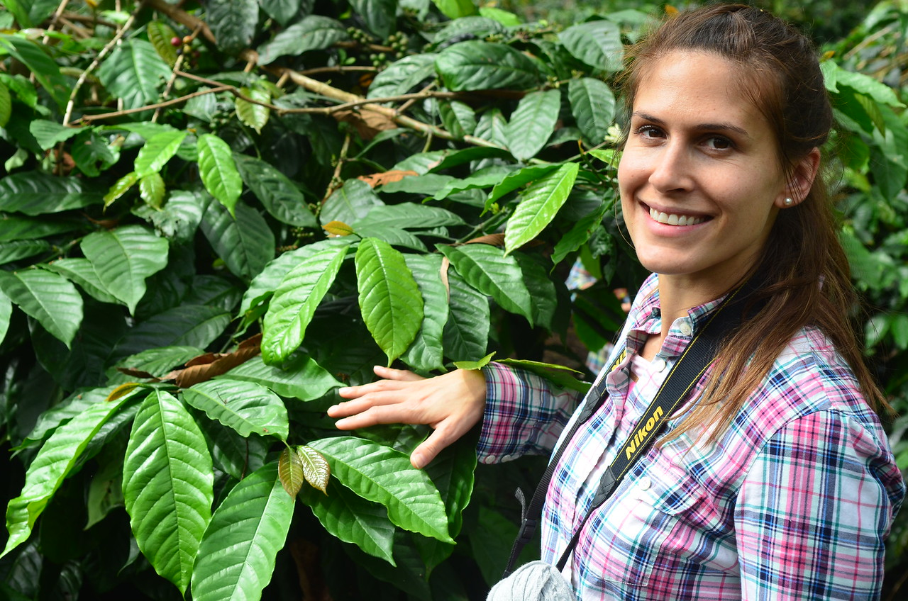 Jennifer Howell, QC and coffee buying, with Typica coffee tree.